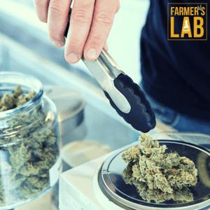 Marijuana Seeds Shipped Directly to Yeadon, PA. Farmers Lab Seeds is your #1 supplier to growing Marijuana in Yeadon, Pennsylvania.