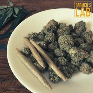 Marijuana Seeds Shipped Directly to Yorkton, SK. Farmers Lab Seeds is your #1 supplier to growing Marijuana in Yorkton, Saskatchewan.