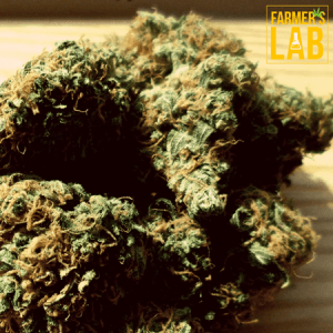 Marijuana Seeds Shipped Directly to Zeehan, TAS. Farmers Lab Seeds is your #1 supplier to growing Marijuana in Zeehan, Tasmania.