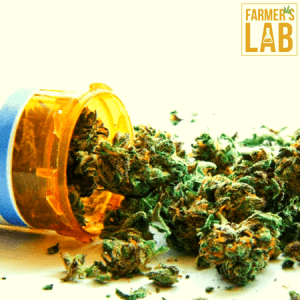 Weed Seeds Shipped Directly to Alliance, OH. Farmers Lab Seeds is your #1 supplier to growing weed in Alliance, Ohio.