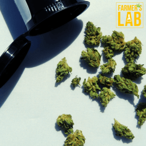 Weed Seeds Shipped Directly to Amory, MS. Farmers Lab Seeds is your #1 supplier to growing weed in Amory, Mississippi.