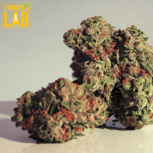 Weed Seeds Shipped Directly to Bonaventure, QC. Farmers Lab Seeds is your #1 supplier to growing weed in Bonaventure, Quebec.
