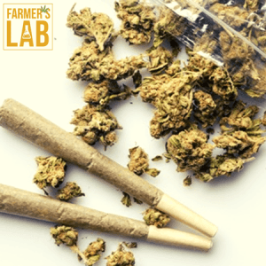 Weed Seeds Shipped Directly to Byram, MS. Farmers Lab Seeds is your #1 supplier to growing weed in Byram, Mississippi.