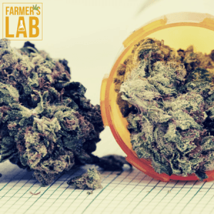 Weed Seeds Shipped Directly to Churchill, MB. Farmers Lab Seeds is your #1 supplier to growing weed in Churchill, Manitoba.