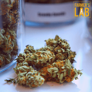 Weed Seeds Shipped Directly to Grande Prairie, AB. Farmers Lab Seeds is your #1 supplier to growing weed in Grande Prairie, Alberta.