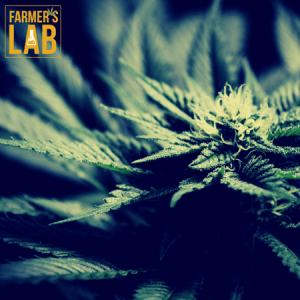 Weed Seeds Shipped Directly to Kansas City, MO. Farmers Lab Seeds is your #1 supplier to growing weed in Kansas City, Missouri.