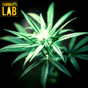Weed Seeds Shipped Directly to Little Rock, AR. Farmers Lab Seeds is your #1 supplier to growing weed in Little Rock, Arkansas.