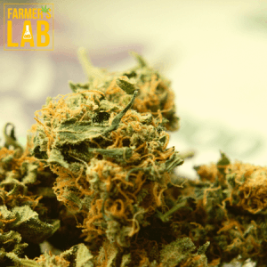 Weed Seeds Shipped Directly to Mission, KS. Farmers Lab Seeds is your #1 supplier to growing weed in Mission, Kansas.