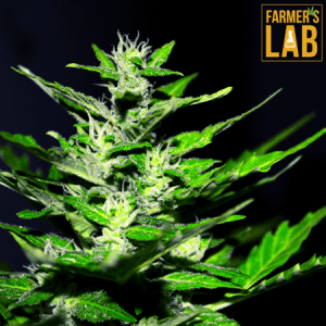 Weed Seeds Shipped Directly to Montreal, QC. Farmers Lab Seeds is your #1 supplier to growing weed in Montreal, Quebec.