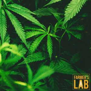 Weed Seeds Shipped Directly to Opelousas, LA. Farmers Lab Seeds is your #1 supplier to growing weed in Opelousas, Louisiana.