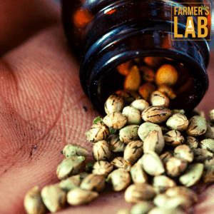 Weed Seeds Shipped Directly to Rainbow City, AL. Farmers Lab Seeds is your #1 supplier to growing weed in Rainbow City, Alabama.