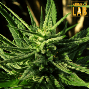 Weed Seeds Shipped Directly to Swansea, IL. Farmers Lab Seeds is your #1 supplier to growing weed in Swansea, Illinois.