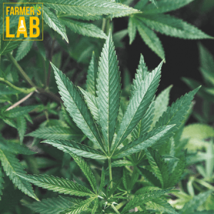 Weed Seeds Shipped Directly to Ville-Marie, QC. Farmers Lab Seeds is your #1 supplier to growing weed in Ville-Marie, Quebec.