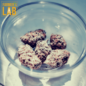Weed Seeds Shipped Directly to York, ME. Farmers Lab Seeds is your #1 supplier to growing weed in York, Maine.
