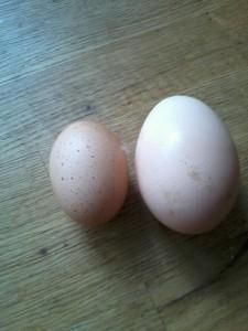 bantam egg