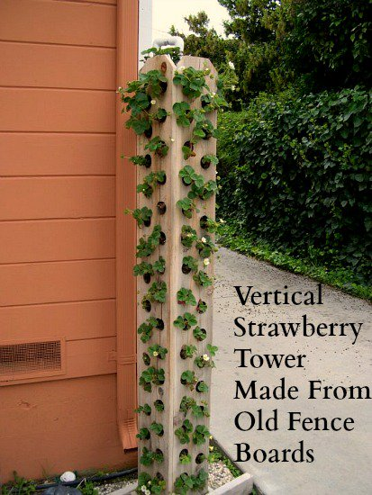 Picket Fence Strawberry Tower