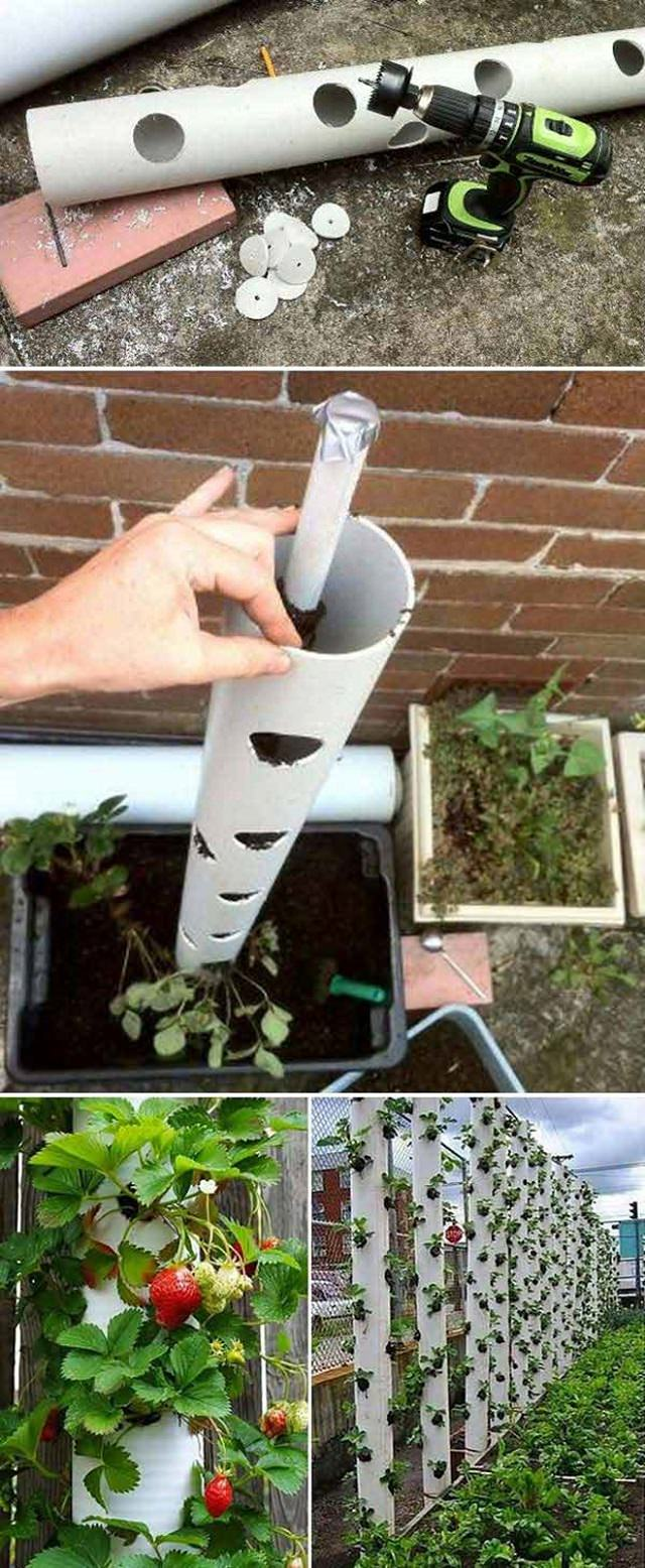 Vertical strawberry pvc pipe planter