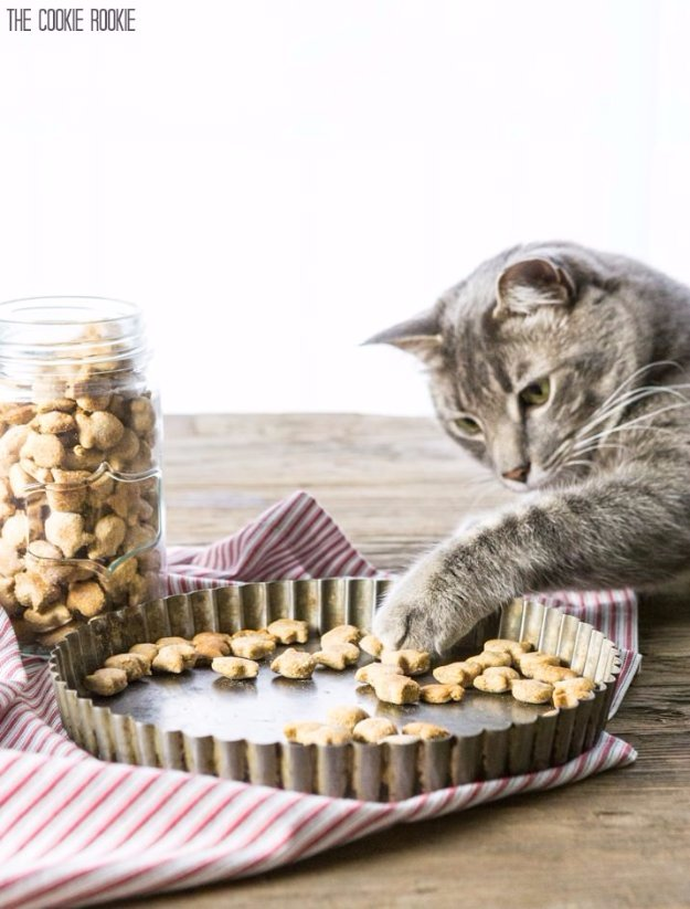 3-Ingredient Salmon Cat Treats