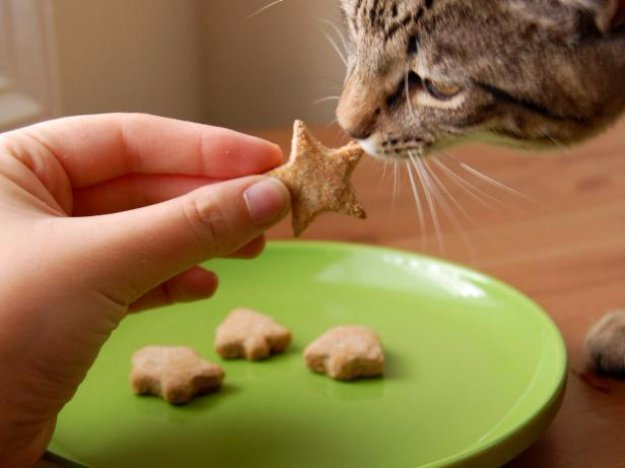 Pet-Approved Recipe For Cats