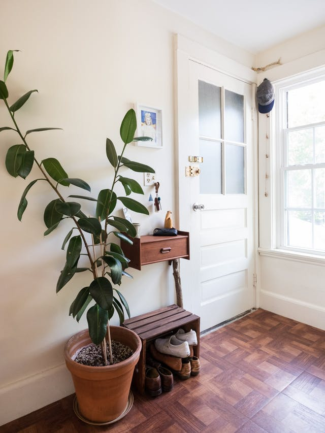 Remover of formaldehyde? Check. Thrives in low light? Check. Super on-trend? Double check. Rubber plants are the definition of win-win-win for your bedside needs.