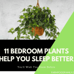 11 Plants Will Help You Get a Better Night's Sleep