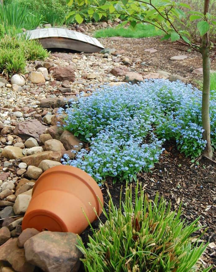Blue Flowers in a Dry Creek Bed