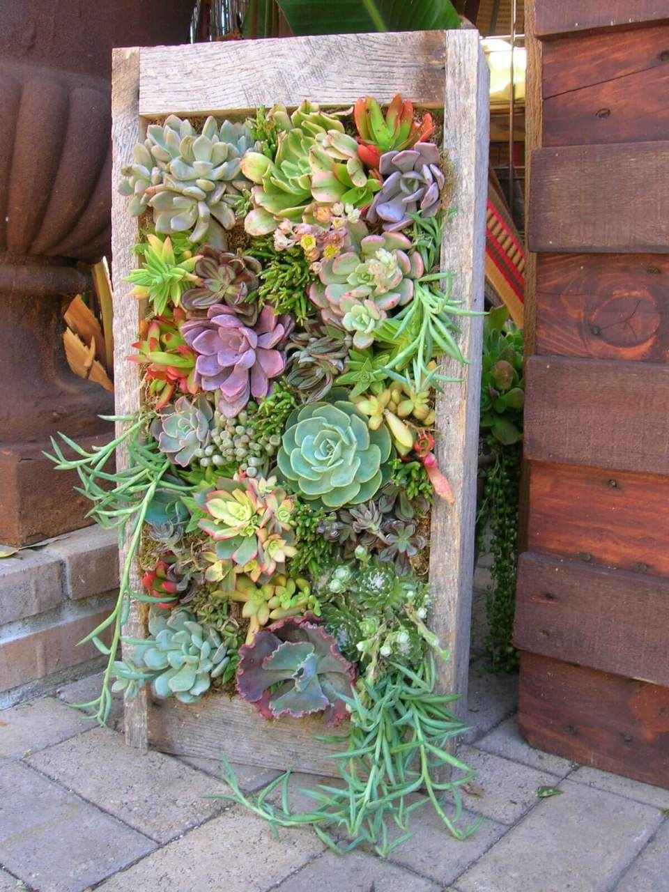Succulent Garden Ideas: Stand And Deliver!