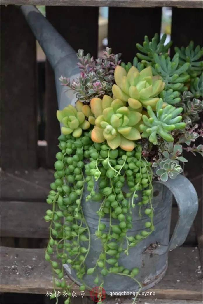 Succulent Garden Ideas: My Cup Runneth Over