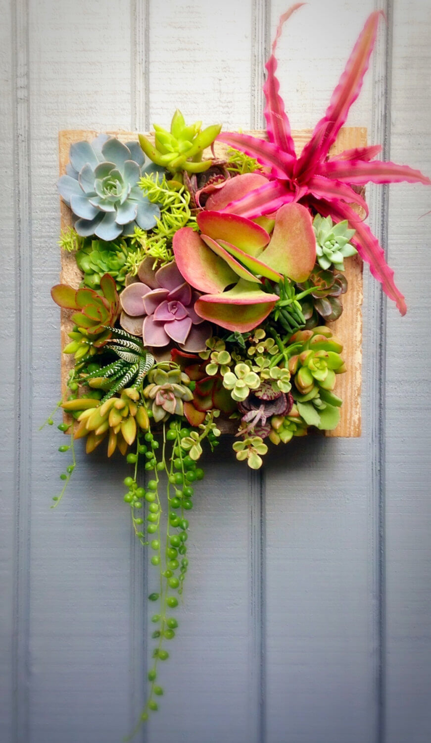 Succulent Garden Ideas: Square-Peg Pete