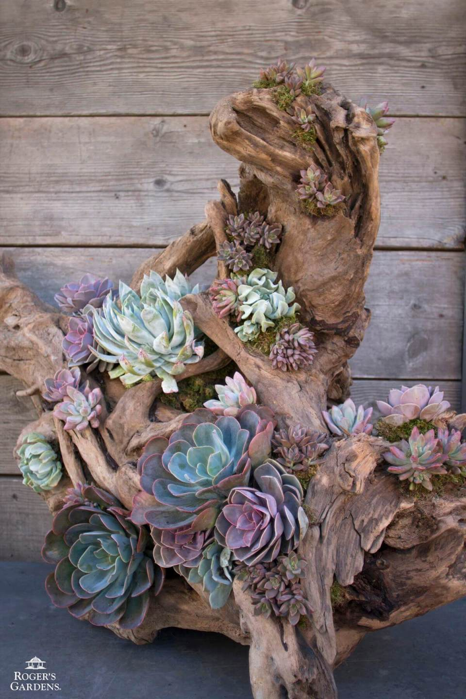 Succulent Garden Ideas: Going Natural