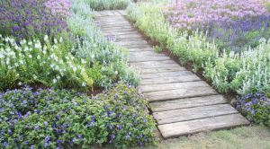 Most Beautiful DIY Garden Path Ideas