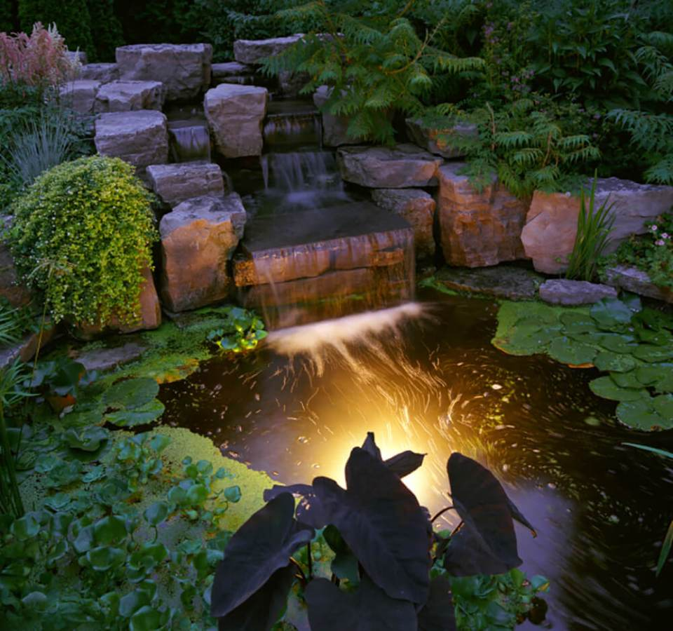 Gorgeous pond in the same garden