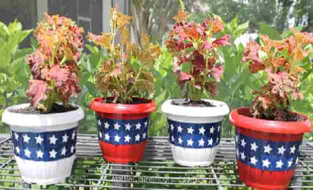 Star-spangled Planters