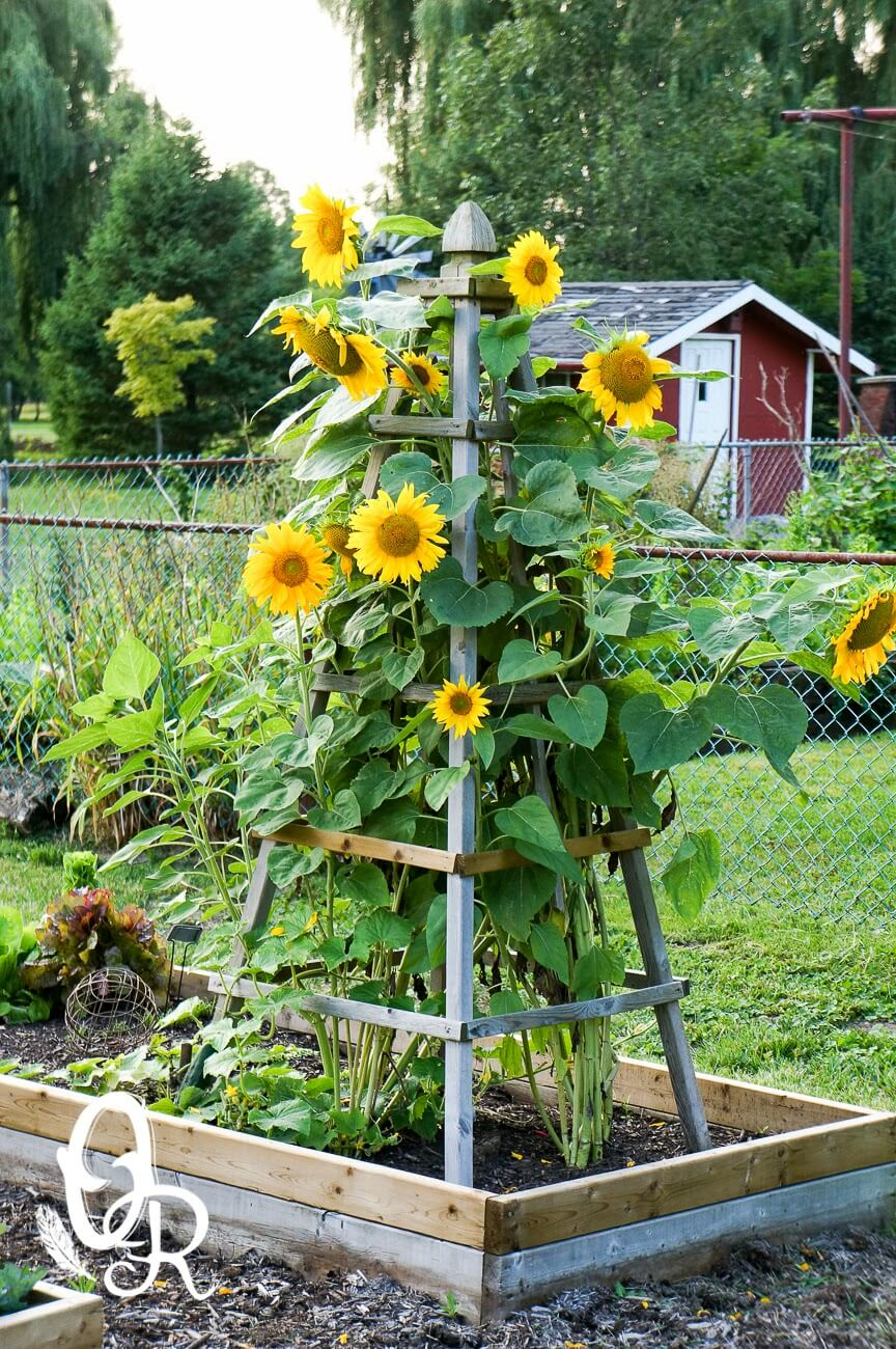 DIY Flower Towers Ideas: Delightfully Pretty Wooden Sunflower Pyramid