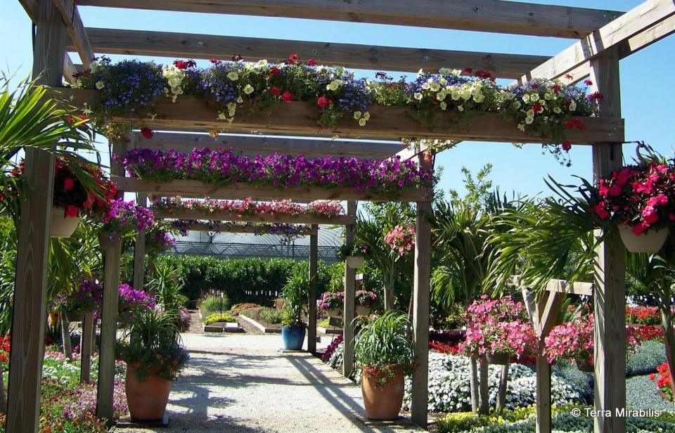 DIY Pergola Ideas: Botanical Promenade Pergola With Planter Implements