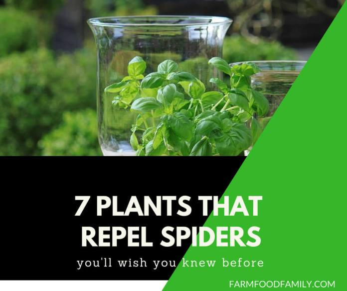 Natural Spider Repellents: 7 Plants That Repel Spiders