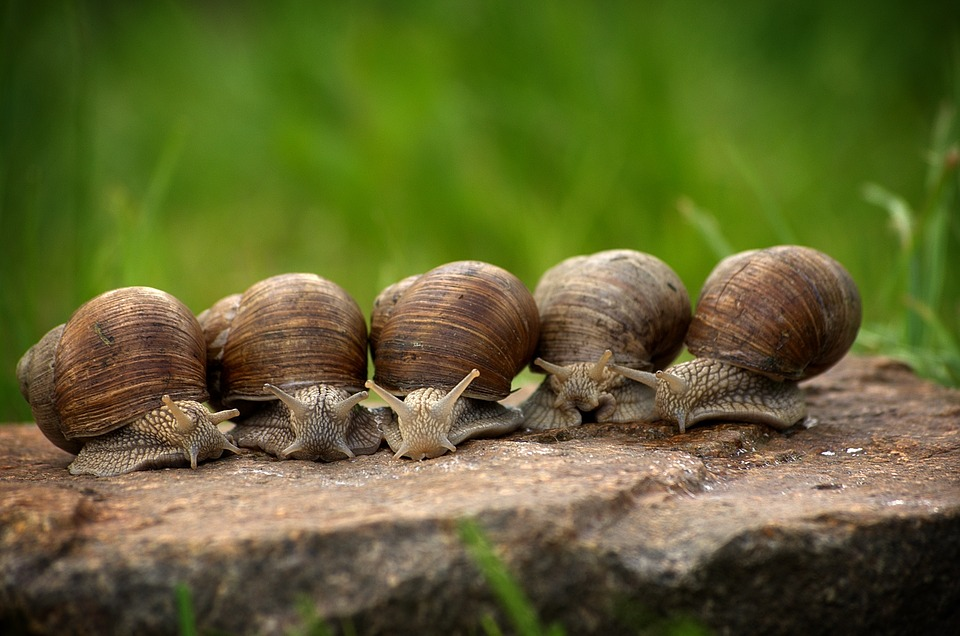 10 Worst Pests In Garden: Snails