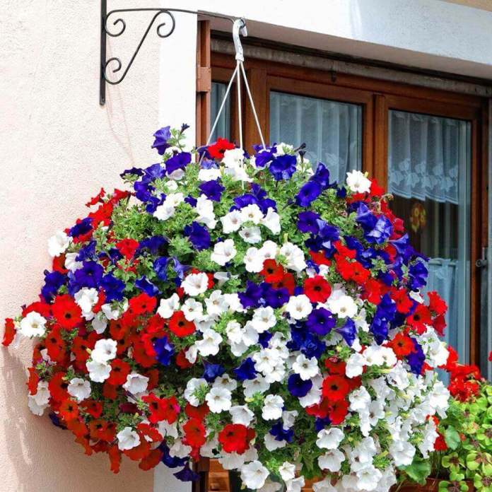 Fourth of July Themed Hanging Basket | DIY Outdoor Hanging Planter Ideas | Plant Pot Design Ideas