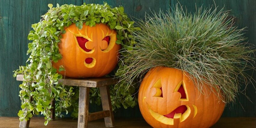 DIY Pumpkin Carving Ideas: Plant It On Me