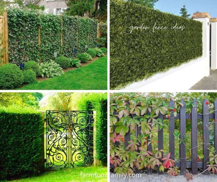Garden plant fence ideas