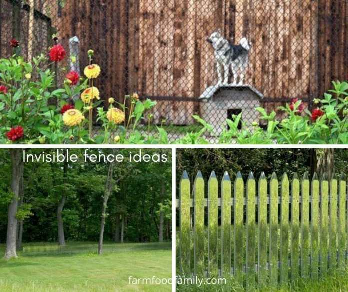 Cheap Invisible fence ideas for landscaping