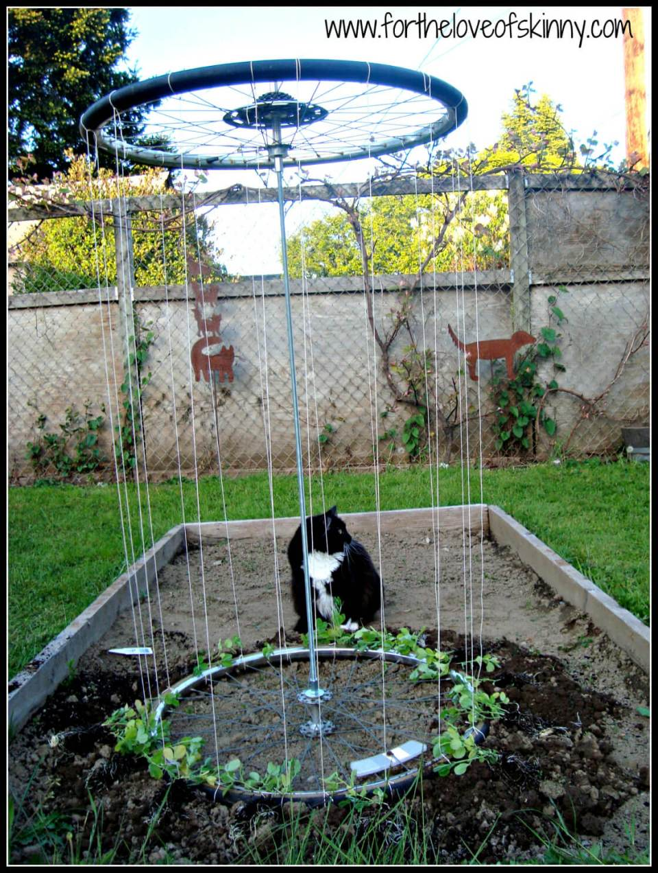 Recycled Tire Trellis | Up-cycled Trellis Ideas For Garden