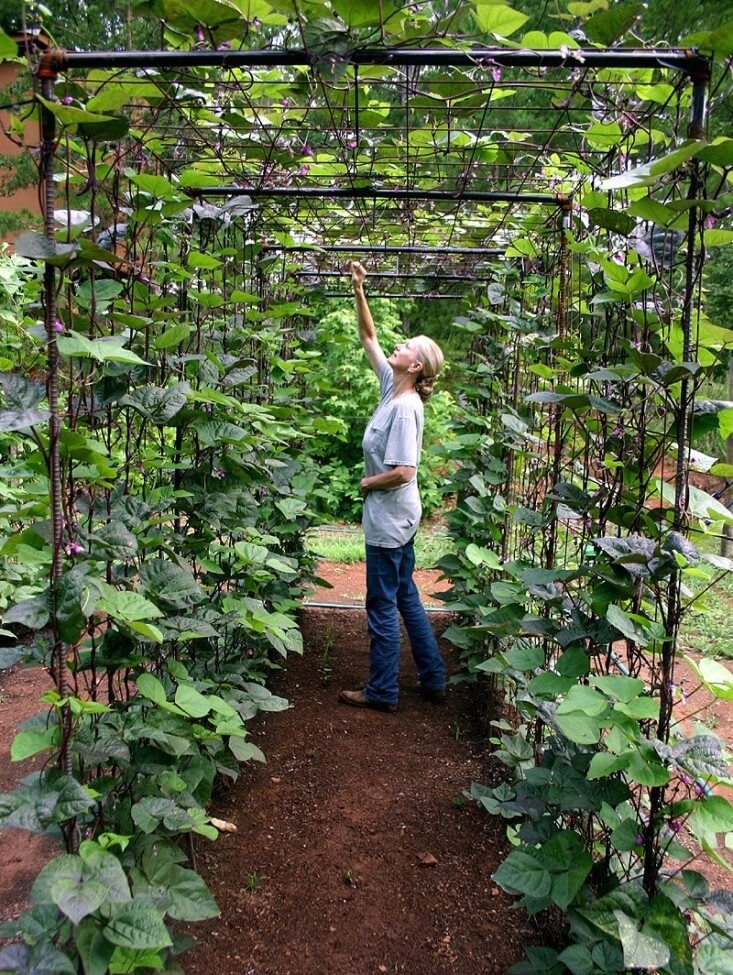 A bean tunnel using metal mesh and poles | Edging Plants for Kitchen Gardens - FarmFoodFamily.com