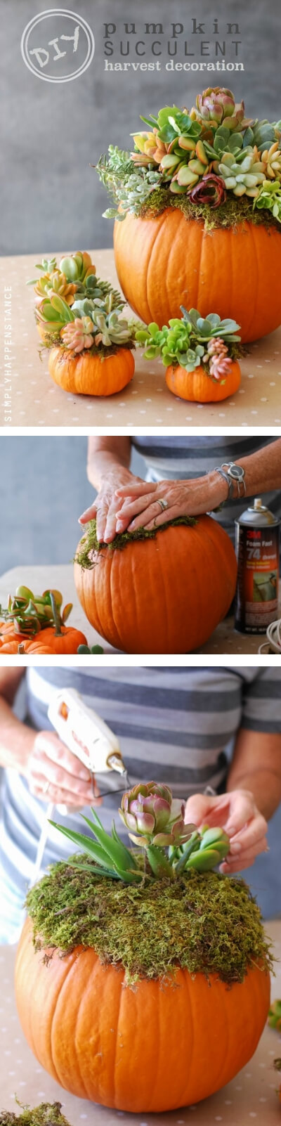 Pumpkin Succulent Harvest | Best DIY Fall Centerpiece Ideas | FarmFoodFamily.com