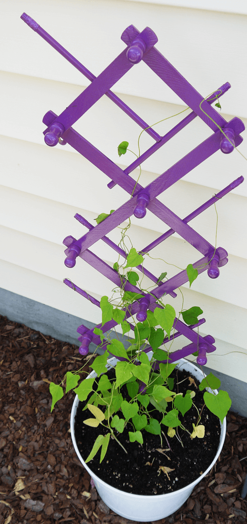 Super Cheap Trellis Idea | Up-cycled Trellis Ideas For Garden