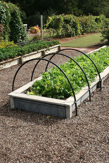Lettuce in raised beds with hoops | Edging Plants for Kitchen Gardens - FarmFoodFamily.com