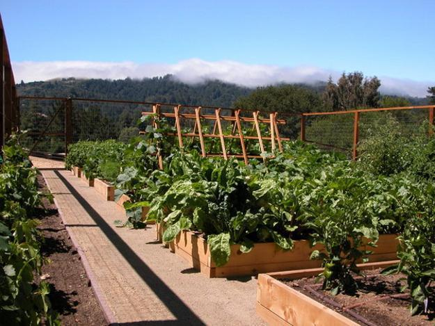 Create a Plant Border Around a Vegetable Patch | Edging Plants for Kitchen Gardens - FarmFoodFamily.com