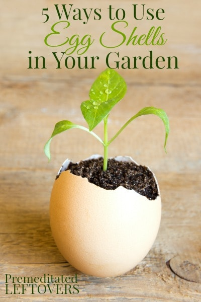Grow your seeds in egg shells | Gardening Hacks and Trips
