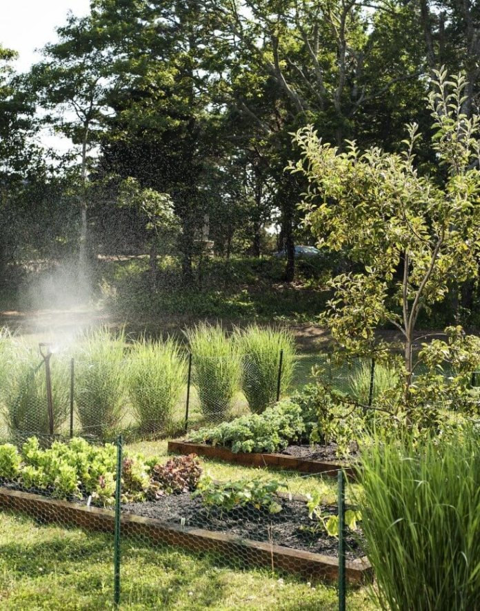 The Cape Cod garden | Edging Plants for Kitchen Gardens - FarmFoodFamily.com