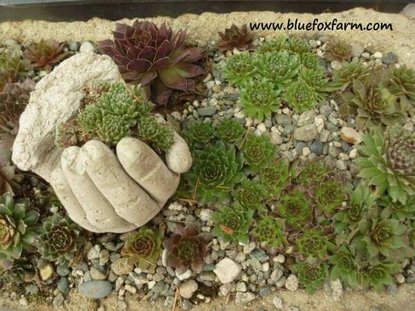 DIY Hypertufa Hands | Low-Budget DIY Garden Pots and Containers